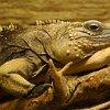 slides/DSC_0475.jpg Fauna DSC_0475